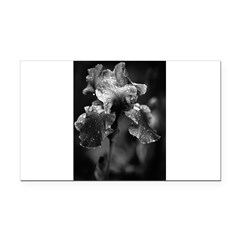 Irises Rectangle Car Magnet