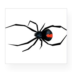 Redback Spider Wine Label
