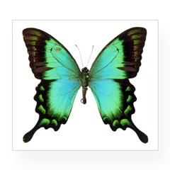 Green Butterfly Rectangle Wine Label