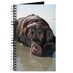 Chocolate Lab KC Journal